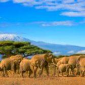 Tanzânia: O Ecoturismo de luxo e a miscelânea cultural no berço da civilização